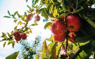 Sadnice koje je sufinancirala Općina Čavle se mogu podignuti u sjemenarni